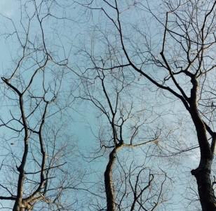 광릉추모공원의 겨울 하늘