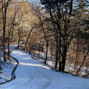 눈이 덮힌 광릉추모공원 숲 길