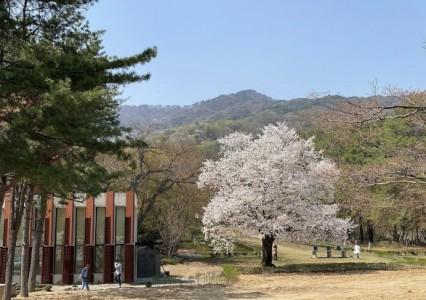벚꽃이 예쁘게 핀 광릉추모공원