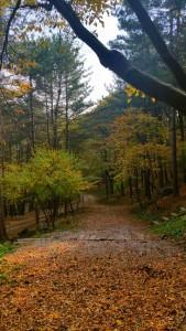 광릉추모공원 만추