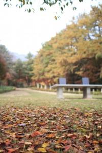 가을이 깊어가요
