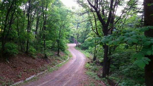 수목장 숲길 산책로