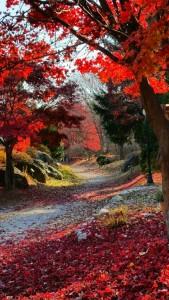 만추의 광릉추모공원