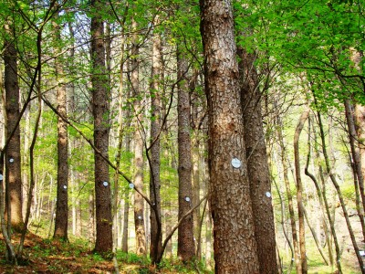 광릉추모공원 수목장 나무