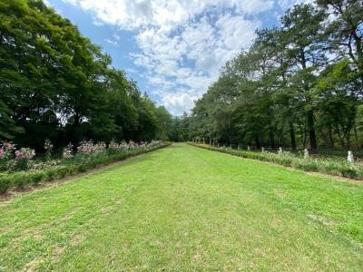 여름 광릉추모공원