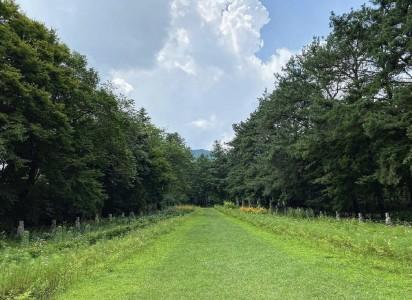 광릉추모공원의 푸른 여름