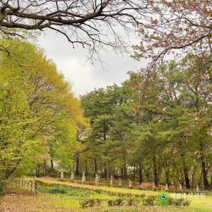 녹음이 우거지는 광릉추모공원